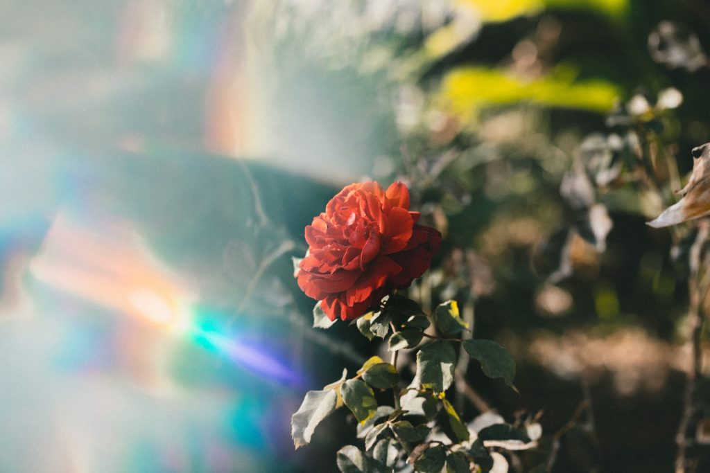 Valentine's Day Tarot Spreads to Let Love Bloom