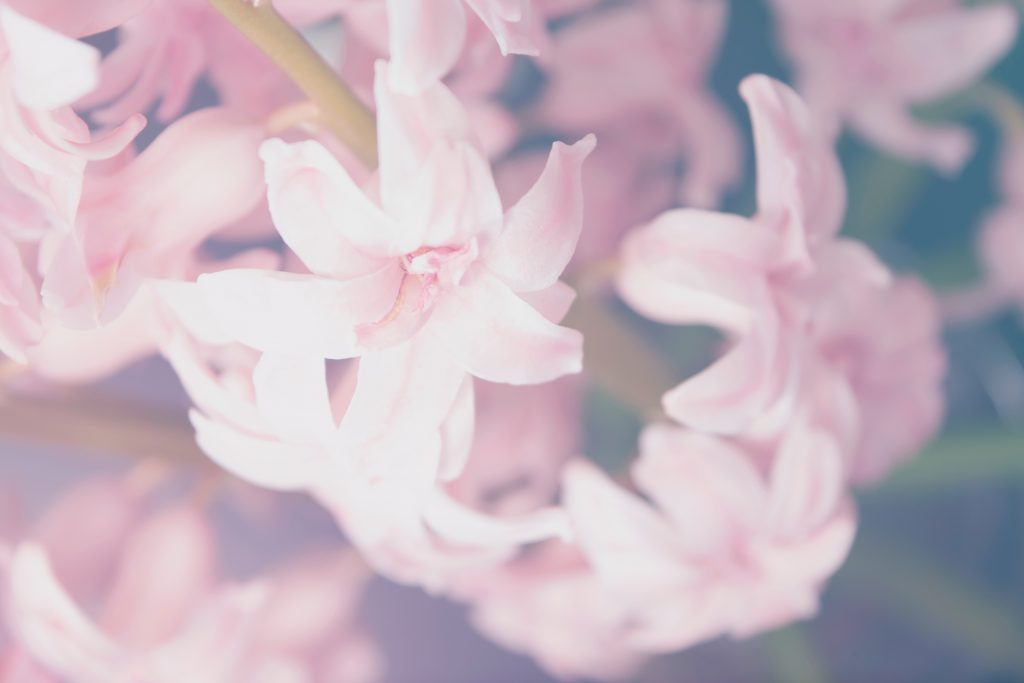 This May, Get Ready for an Astrological Bloom