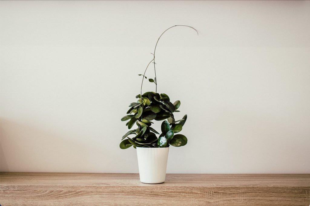 This Is the Perfect Houseplant for Your Zodiac Sign