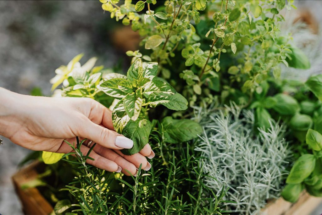 Clear Your Cleanse: 6 Herbs to Burn Instead of Sage