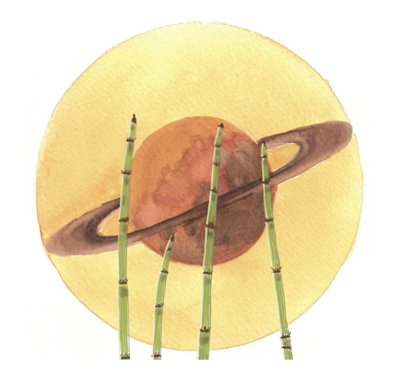 Saturn's Plants Are Symbols of Strength